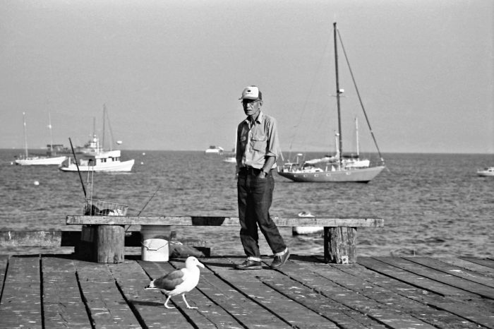 Man in cap and seagull