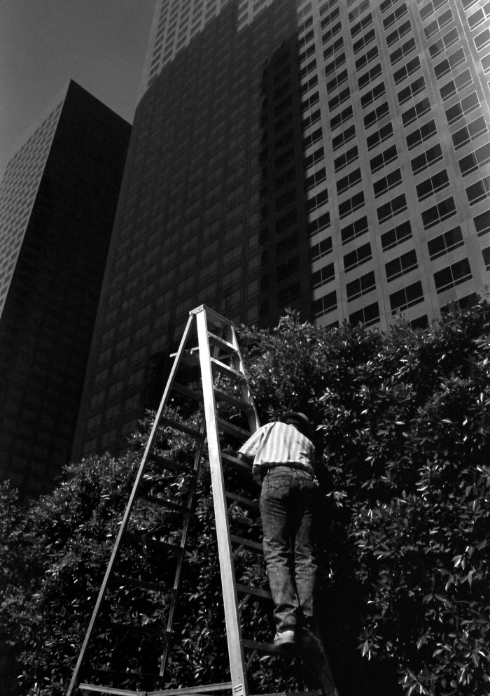 Gardener on a ladder at the foot of the skyscrapers