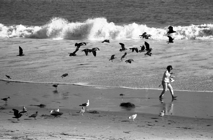 Woman alone with seagulls